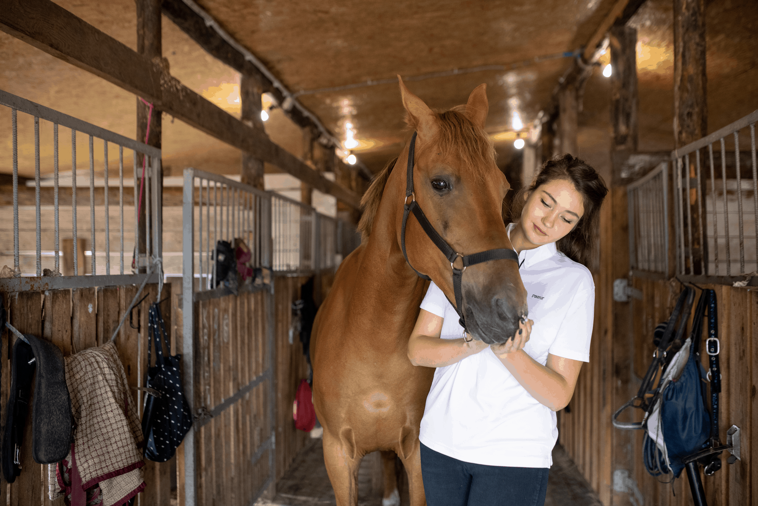 Equine Veterinary Technician